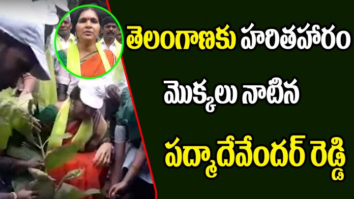 Padma Devender Reddy Participates In Haritha Haram Program